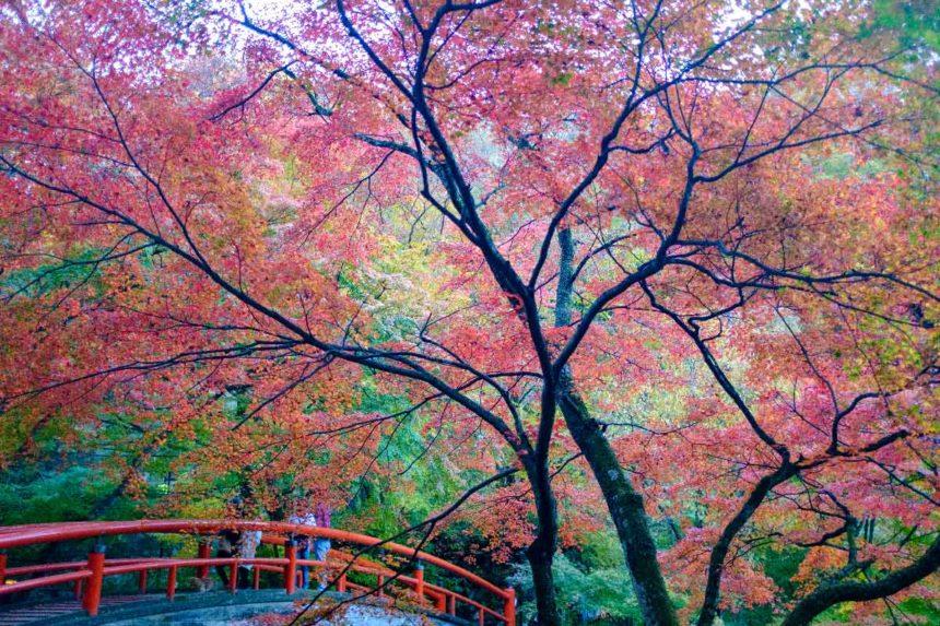 伊香保の河鹿橋の紅葉
