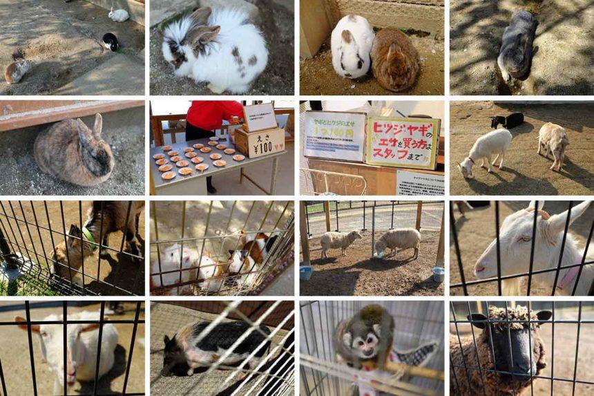 牛久大仏にある小動物公園の小動物