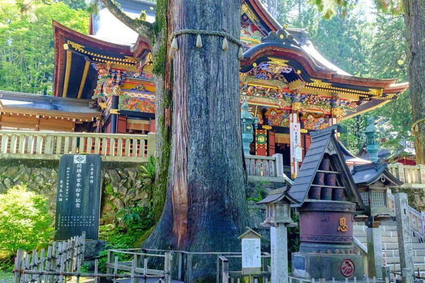 三峯神社の神木