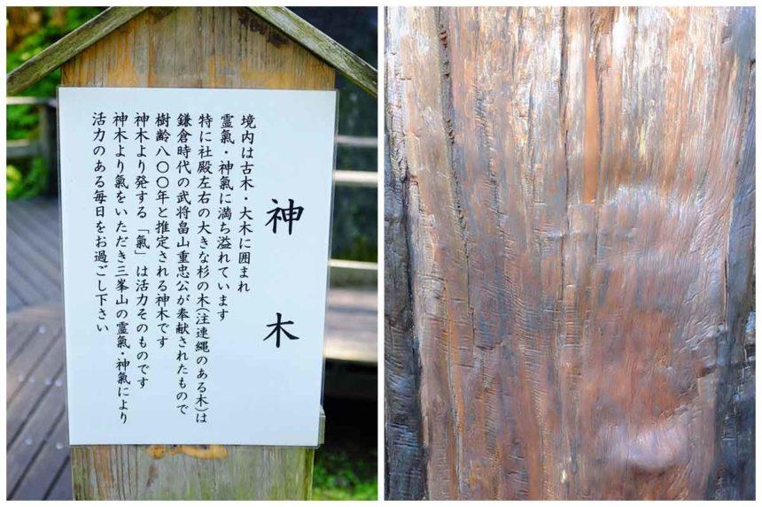 三峯神社の神木の説明看板と神木の表面