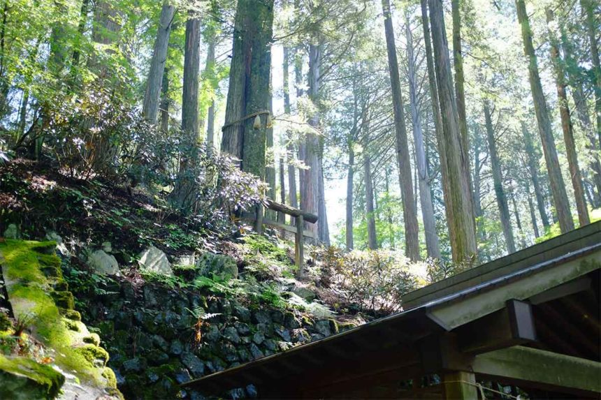 三峯神社の縁結びの木